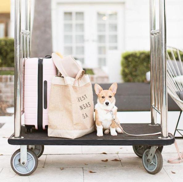 Best Dog Friendly Hotels of 2019 | Modern Dog magazine
