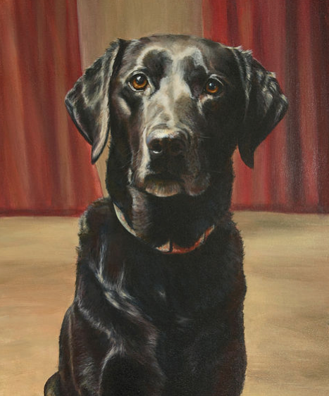 beautiful pet portrait of a Labrador