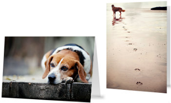 Heeling cards what you say and what you givetters created with passion and a desire to acknowledge and honour pet loss heeling cards is a pet focused greeting card company catering to both wholesale and m4hsunfo