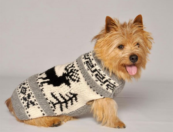Maple Leash Knitted Sweater