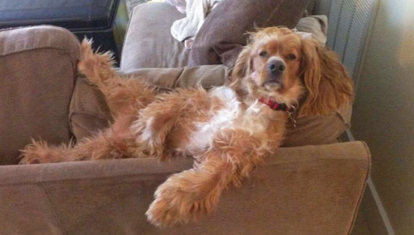 7 Dogs Really Into Just Chillin' | Modern Dog magazine