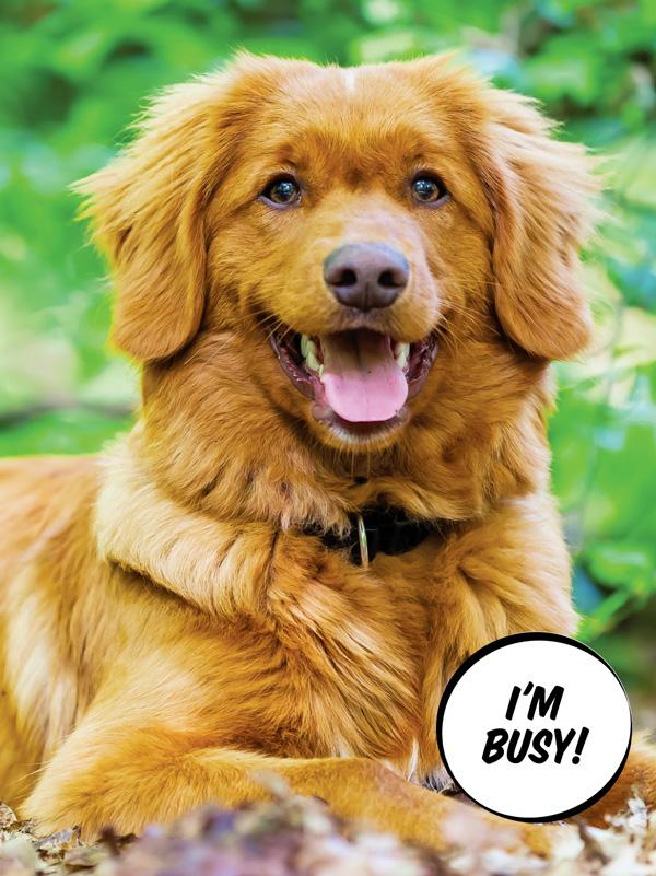 The Nova Scotia Duck Tolling Retriever Modern Dog Magazine