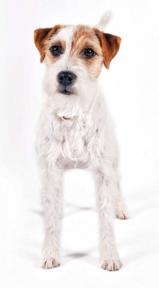 Know Your Terriers | Modern Dog magazine