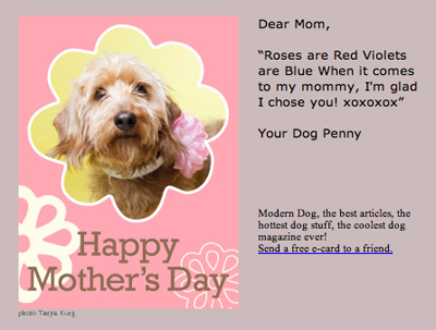 My Dog Sent Me A Mother S Day Card