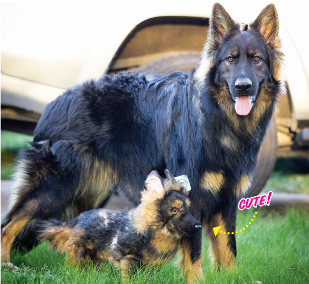 7c2a3ae2a2c8 Turn Any Pic of Your Pup Into a Custom Stuffed Animal!   Modern Dog ...