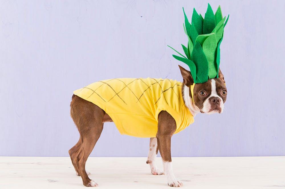 5 Quick And Easy Diy Dog Costumes Modern Dog Magazine