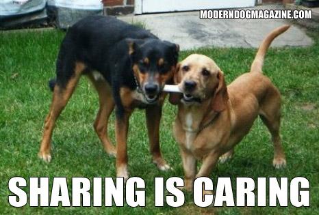 More Modern Dog Memes Modern Dog Magazine