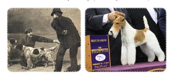 The Westminster Kennel Club Dog Show | Modern Dog magazine