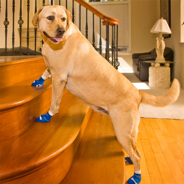 Image result for dog in socks