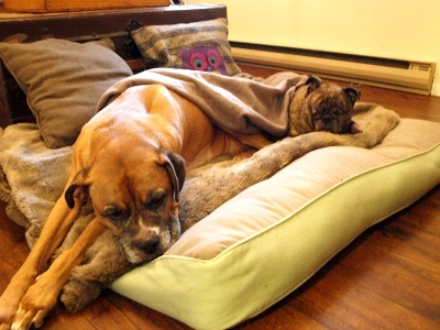 A Bed Built For A Queen And Her King Modern Dog Magazine