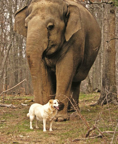 The Elephant Sanctuary Mourns Loss Of Bella The Dog