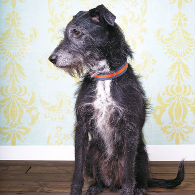 Mutts, Glorious Mutts! | Modern Dog magazine