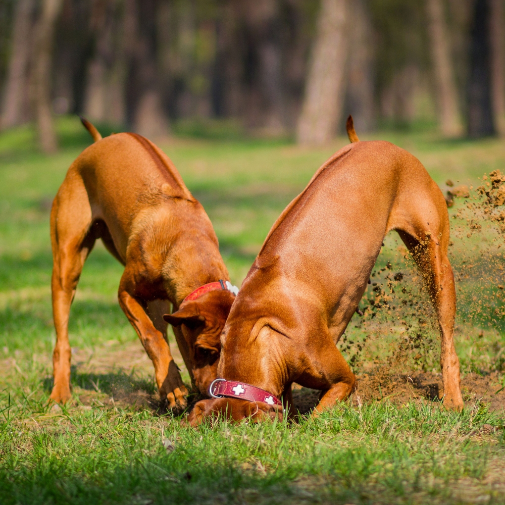 try geocaching with your dog