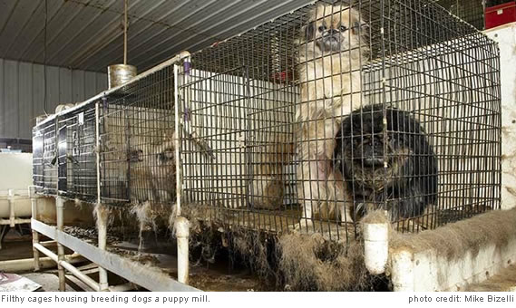usda rule expanding regulation of puppy mills modern dog