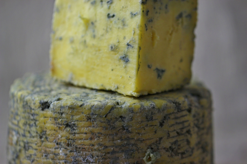Blue cheese dangerous for dogs