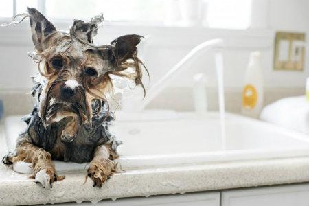 Τι ανακουφίζει έναν σκύλο από τον κνησμό;