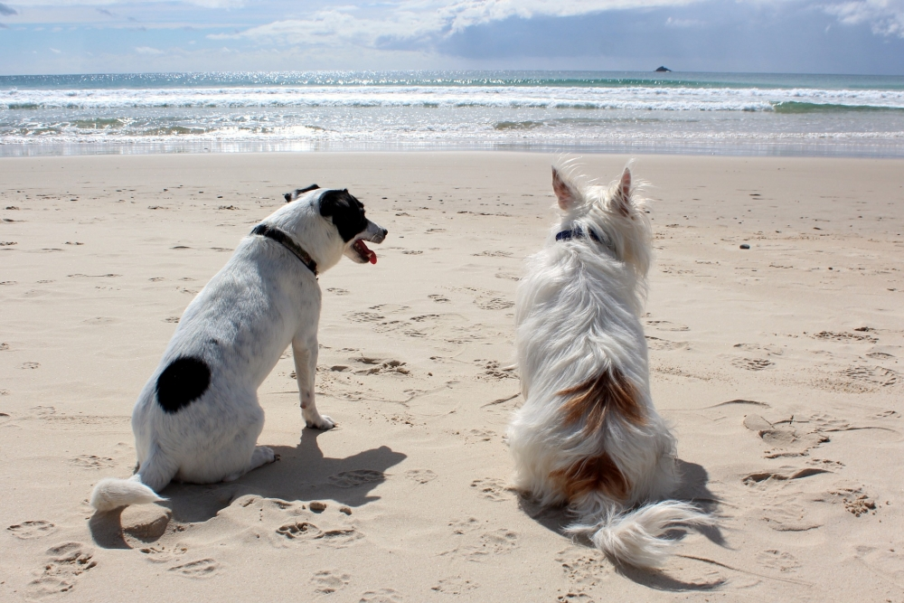 Two dogs sitting on beach