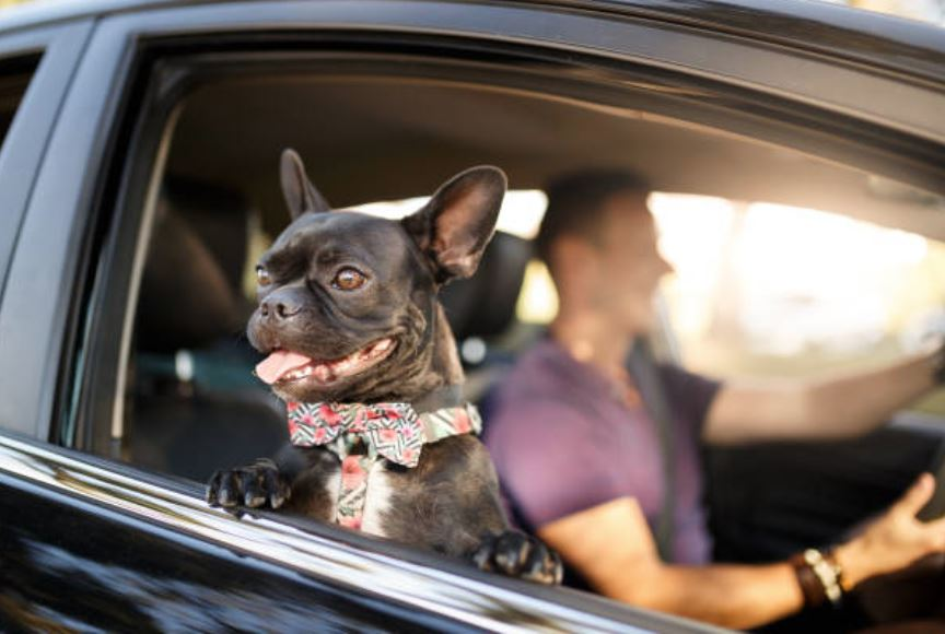Tips for travelling with dog in car