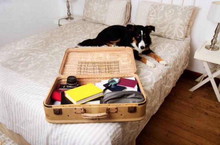 Dog Packing List