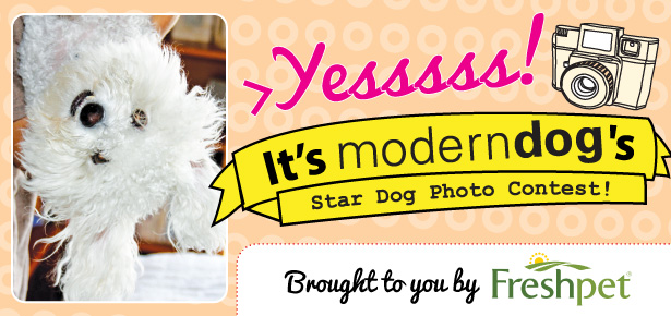 Modern Dogs Cover Dog Photo Contest Modern Dog Magazine