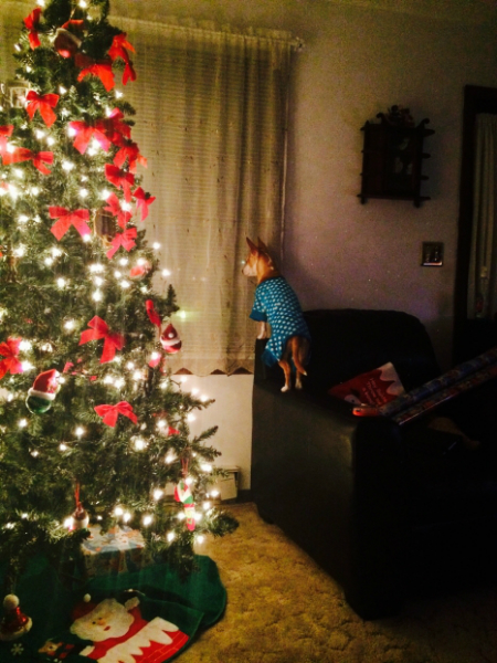 Dog waiting by the window for Santa beside a Christmas tree
