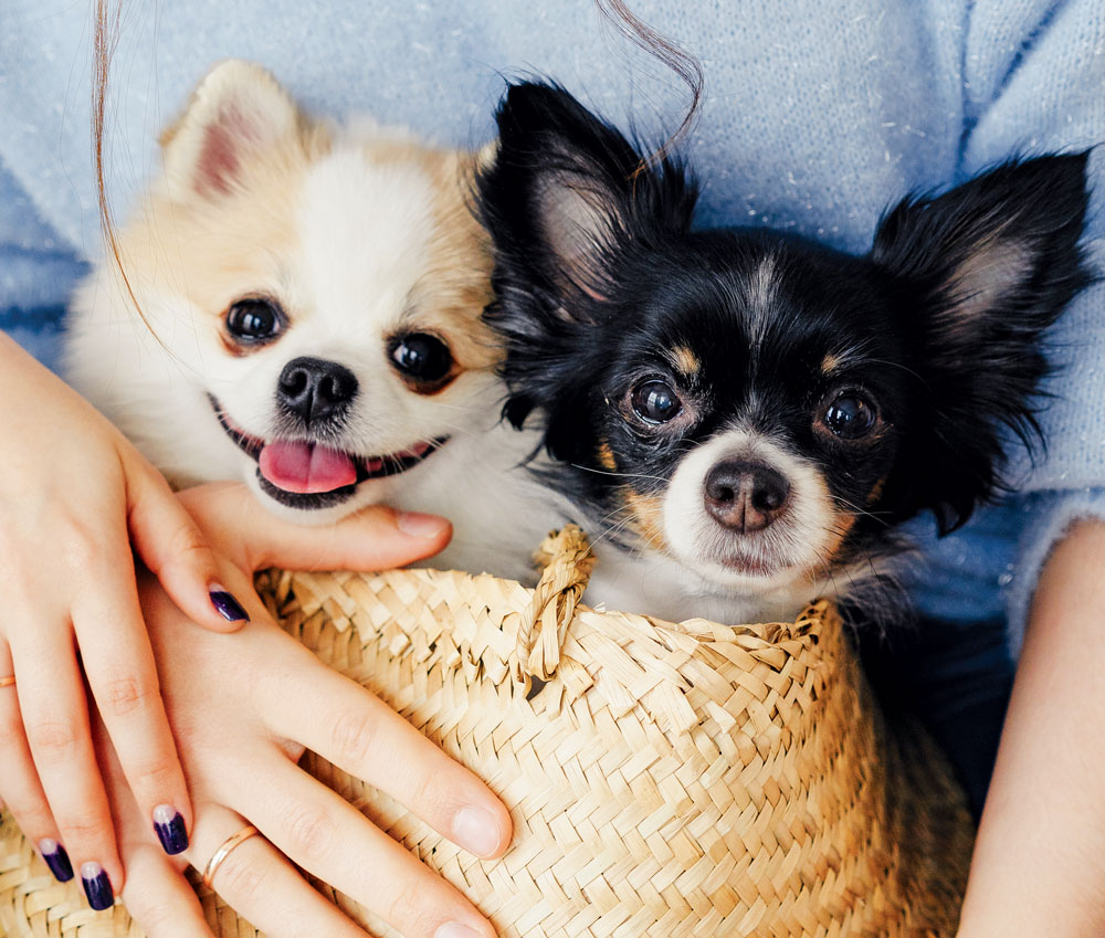 dog lovers dating service