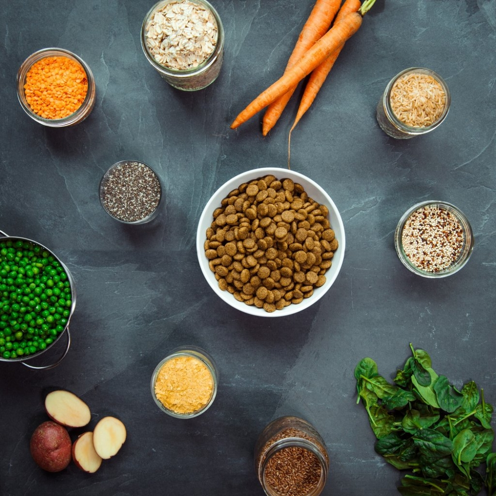 Benefits Of Kibble Food For Dogs And Digestion System