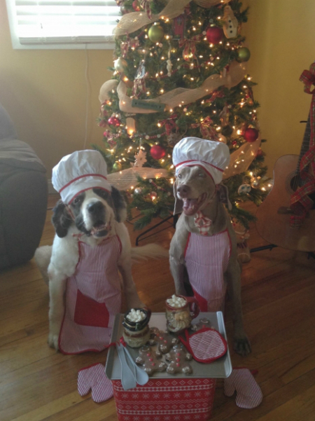 Two dogs wearing Christmas outfits, aprons and hats