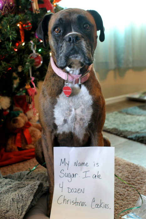 Dogs That Are Not Sorry This Christmas Modern Dog Magazine