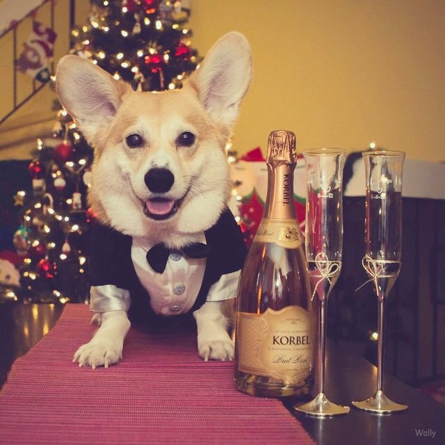 Dogs Who Are So Ready to Celebrate New Year's Eve | Modern ...