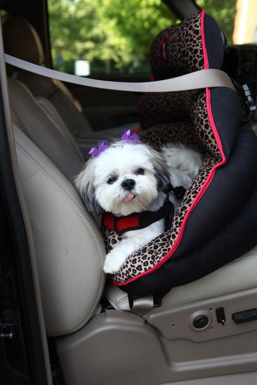 Pupsaver S Rear Facing Small Dog Car Seat Modern Dog