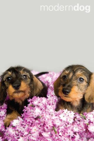 Puppies Free Modern Dog Wallpaper Modern Dog Magazine