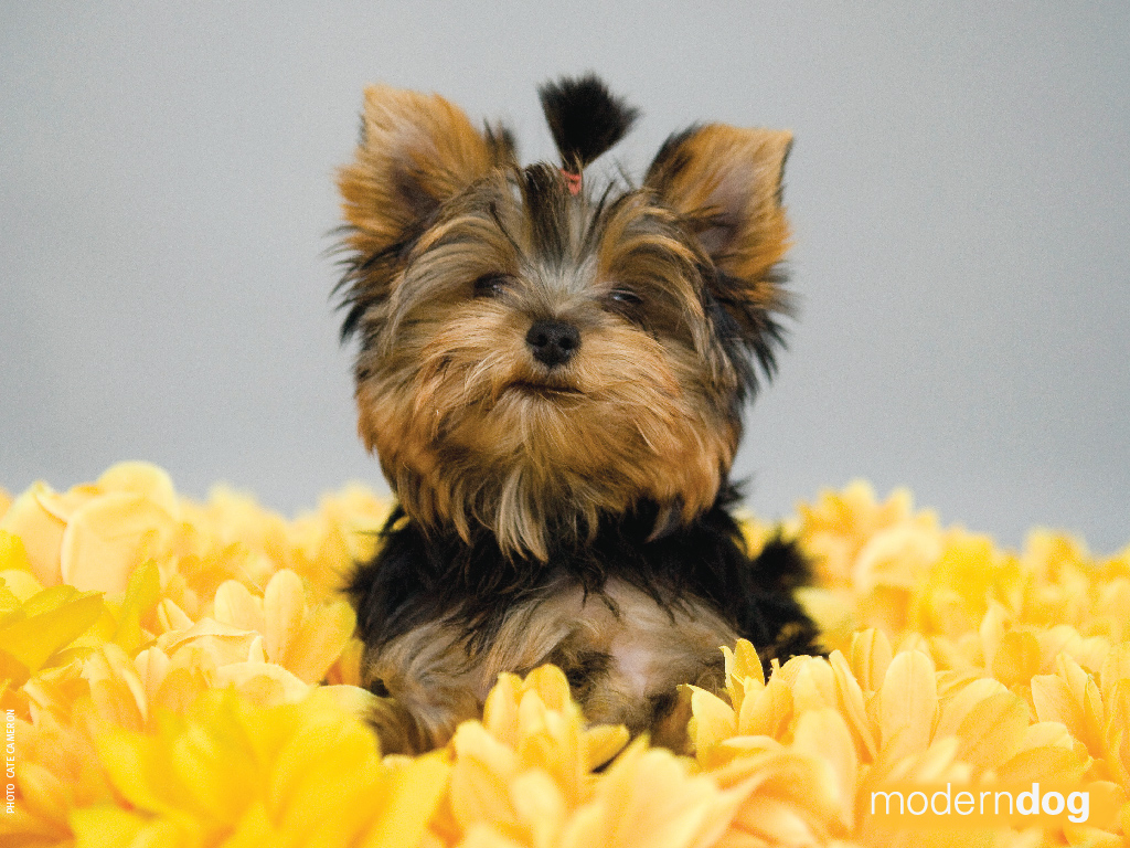 Dogs And Puppies Wallpaper Puppies! Free Modern D...