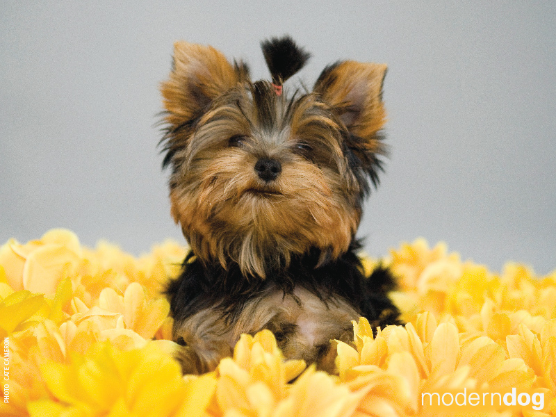 Puppies! Free Modern Dog Wallpaper