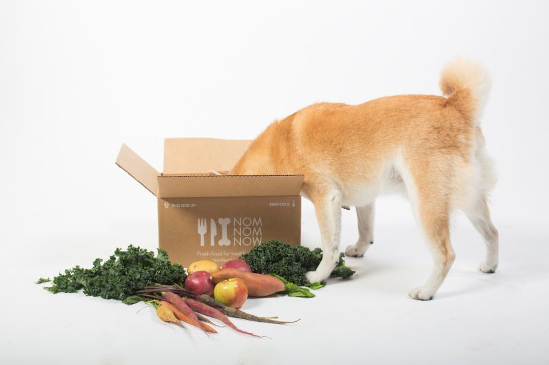 what is the best dog food brand