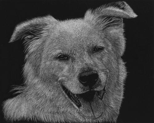 Natalie Zimmerman Scratchboard Art Modern Dog Magazine