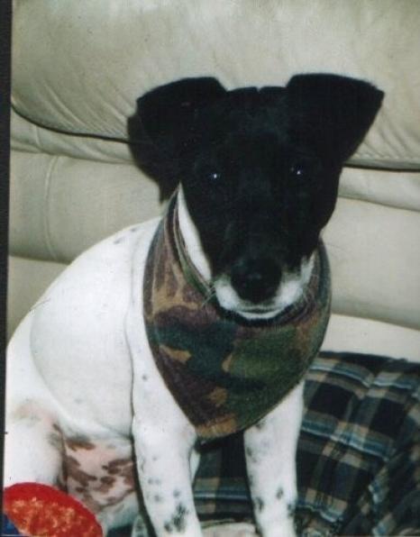 Otis...the Terrorist! (Terrier!).jpg