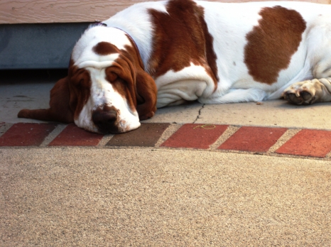 Sherlock____Backyard_Snoozing____Dec_2010[1].jpg