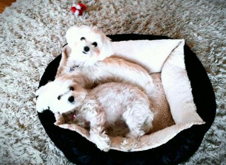 my pups.jpg