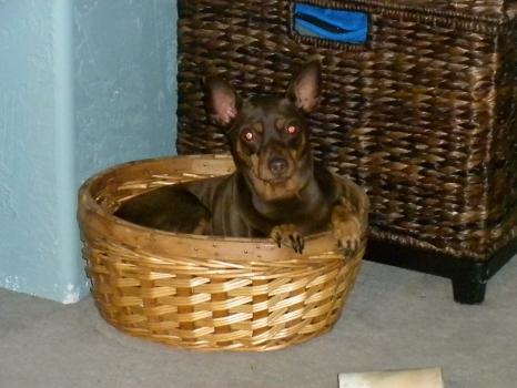was in basket.JPG