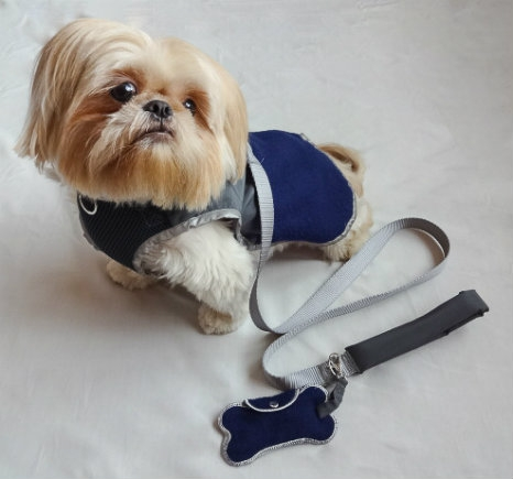 Central Park Pups 3-in-1 combo harness