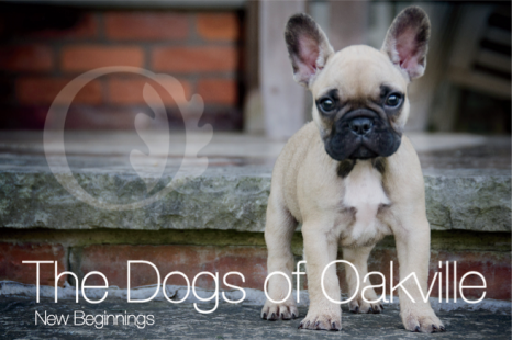 The Dogs of Oakville