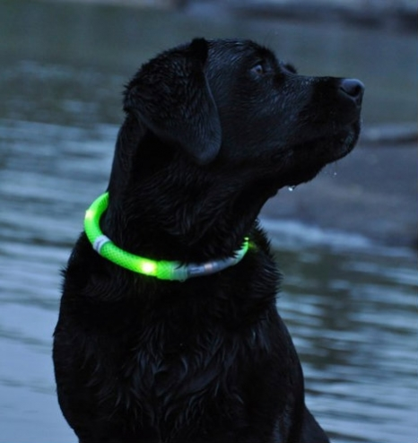 Illuminated Dog Collar