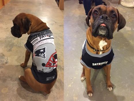 Adorable New Pet Jerseys for NFL Season