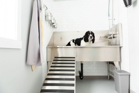 Ridalcou0027s Customizable Stainless Steel Dog Tubs!