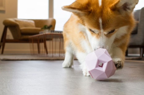 Odin is a Pembroke Welsh Corgi, Chief Toy Inspector and his pawrentals are the founders of Up Dog Toys.