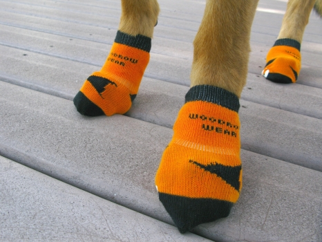 Power Paws Non-Slip Socks