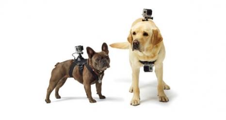 Fetch (GoPro Dog Harness)