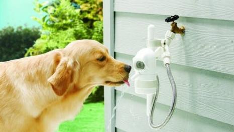 WaterDog Outdoor Fountain