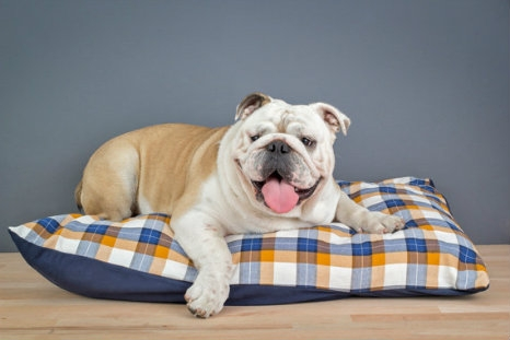 Classic Printed Dog Bed
